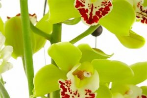 Warringal Orchid Society Winter Show