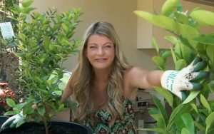 Melissa King Talks about Potted Citrus and Olives
