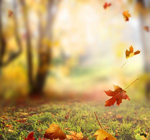 Falling Autumn Leave image