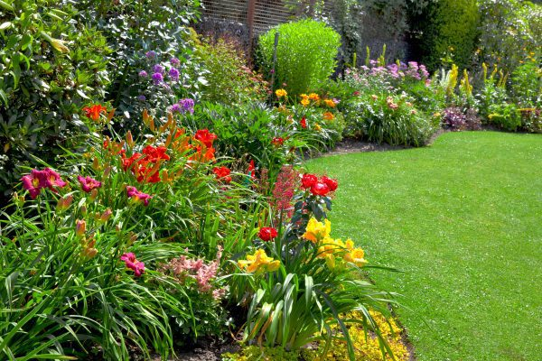 Green Lawn in a Colorful Landscape Formal Garden