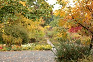 Autumn Garden in Color