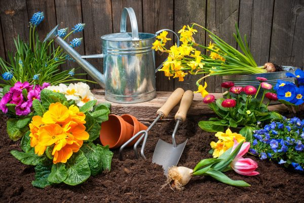 What to do at the start of spring in the garden