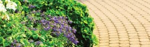 How to get beautiful, brighter gardens with PowerFeed PRO SERIES Plant Food range banner