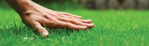 Hand on Green Grass