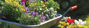 Bunch of Flowers on Wheelbarrow