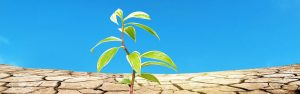 Healthy Plant in Dry and Barren Land