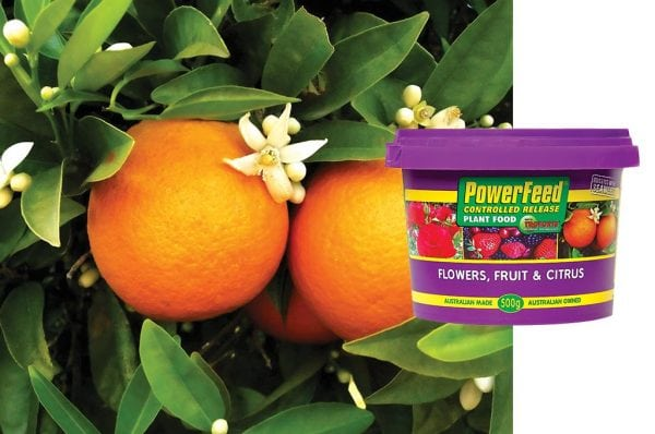 Purple Seasol Powerfeed Controlled Release Plant Food for Flowers, Fruits and Citrus with Troforte