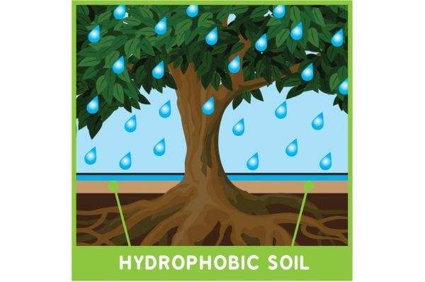 What is a hydrophobic soil