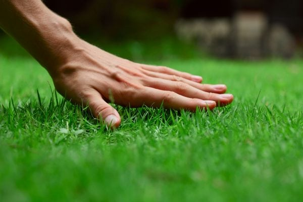 How to rejuvenate your lawn in Spring