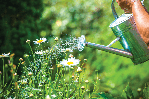 Watering some plant in summer