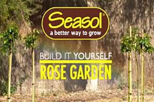 How to build a rose garden