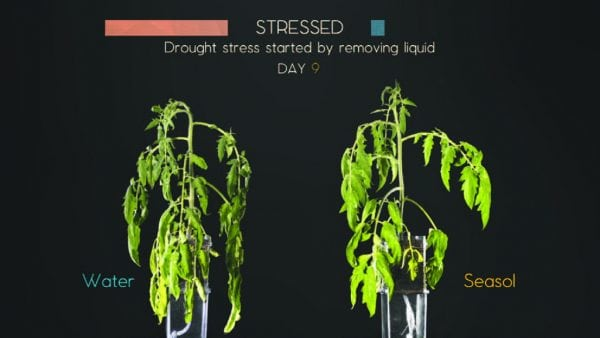 How Seasol helps plants with drought trials