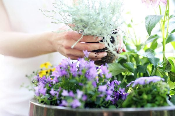 How to feed your spring flowering plants