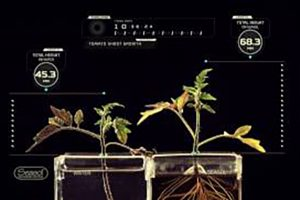 Seasol promotes Tomato foliage growth