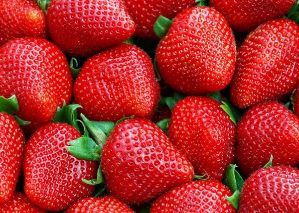 Seasol Commercial Strawberry Fruit Trial Report Summary