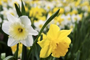 How to look after young bulbs