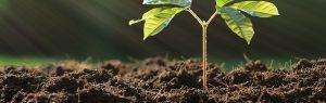 Tips for autumn soil care banner