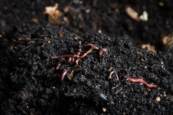 How to improve your soil with Seasol Liquid Compost