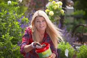 How to look after your roses in autumn, autumn TLC