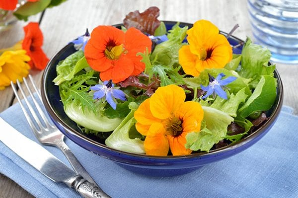 Healthy edible flower with Seasol