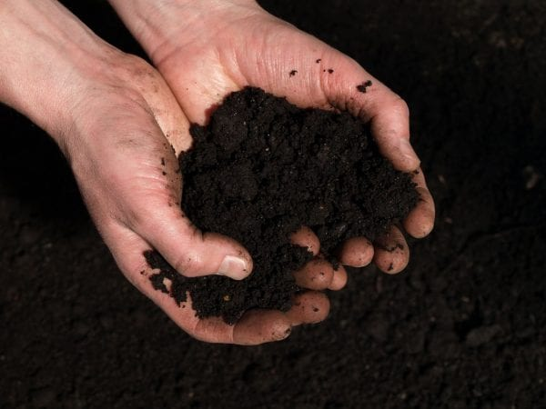 Tips for spring soil care - understand soil fertility