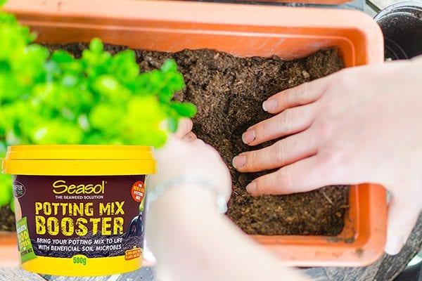 Seasol Potting Mix Booster - existing potting mix