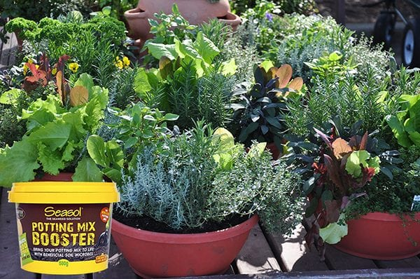 Seasol Potting Mix Booster_with pots Your Garden in Oct 2019