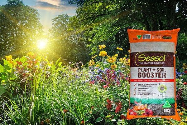Summer Soil TLC tips