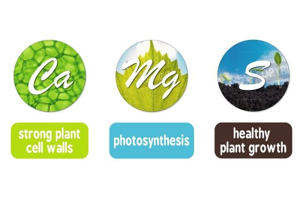 What is Magnesium, Calcium and Sulphur for plant life