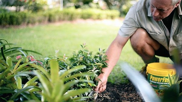 How to apply Fertilisers to your plants