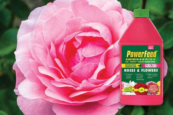 How to get bigger yields of bigger, brighter, more beautiful blooms.