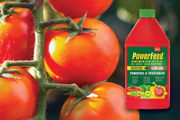 How to get bigger yields of tastier tomatoes & vegetables.