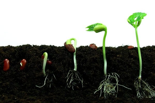 How to grow vegetables - Broccoli