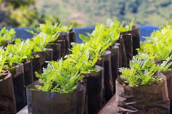 Growing vegetables in pots