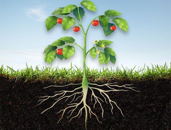 What is an organic fertiliser