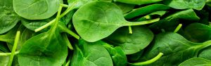 How to grow vegetables - spinach