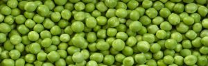 How to grow vegetables - peas
