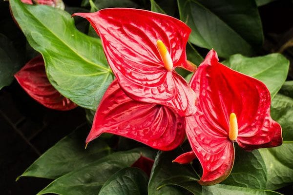 Indoor Plant Care and great indoor plant varieties