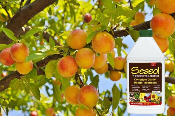 Why Spray Fruit Trees in Winter
