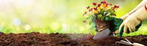 Winter Soil Renewal with Seasol Plant + Soil Booster