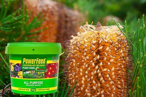Australian native gardens in a pot Your Garden September 2020