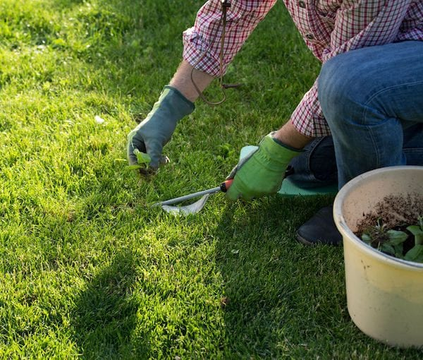 Late winter lawn care for a lush green lawns. Easy and simple tips