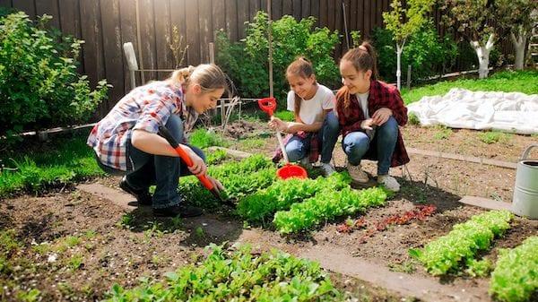Your Garden October 2020