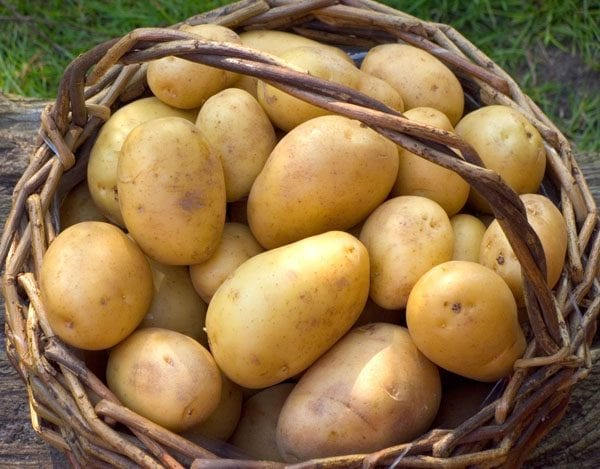How to grow vegetables - potatoes. Handy Hints