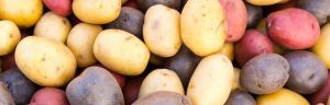 How to grow vegetables - potatoes.