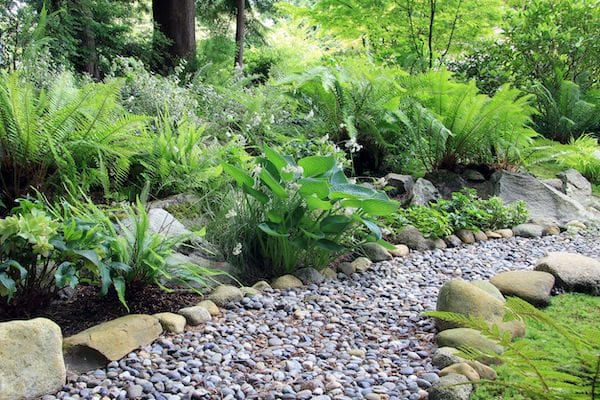7 easy tips to creating a rainforest garden