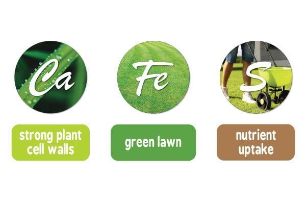 Handy Hint Seasol's Good Guide to Understanding Lawn