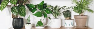 Garden - Handy Hint Banner - Tips on how to look after your pots and planters inside and outdoor to grow, flower and fruit