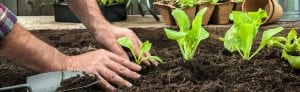 Vegetables - Handy Hint Banner - Tips on how to have a a bumper crop of tasty edible produce