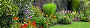 Garden - Handy Hint Banner - Tips on how to have a vibrant beautiful garden